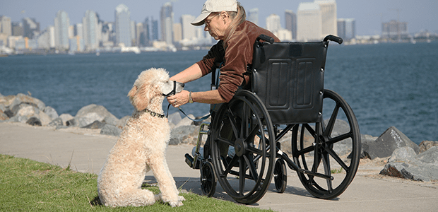 Wheelchair Accessories | Silver Cross®